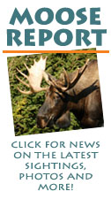 Moose Report - click for the latest news, sightings, photos and more